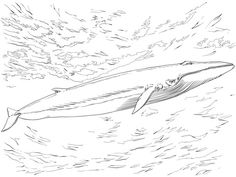 whale coloring pages orca sea animals coloring pages for