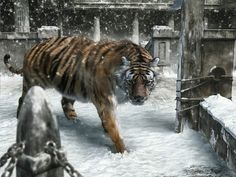 112 new year tiger poster pictures Snow Tiger, Pet Tiger, Tiger Wallpaper, Name Wallpaper, Cool Backgrounds Hd, Tiger Walking, Tiger Poster, Tiger Love, High Resolution Wallpapers