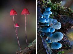 Mushrooms, bioradar magazine