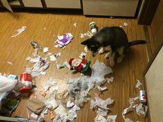 Why Should I Train my Husky? « Husky Puppies For Sale Husky Puppies For Sale