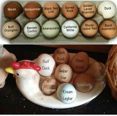 Identify your eggs