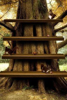 Tree Shelf Home Screen Wallpaper