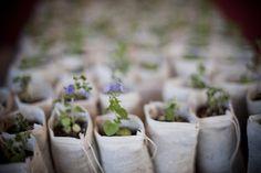 Plant wedding favors Photography by Brandon Thibodeaux