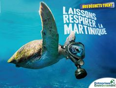 Faisons respecter notre île !  #martinik #martinique #madinina #972 #earth #saveearth #turtle #tortue #cetacean #cétacés #dauphin #baleine #cachalot #familytime #tourist #touristes #croisiere #caraibes #carribean