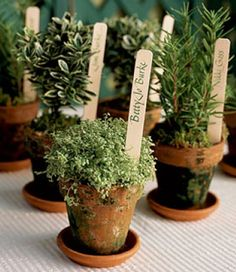 Favor/seating-placement herb-pots