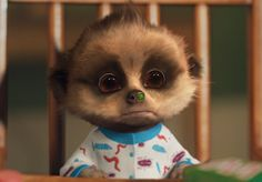 Oleg puts part of his dinner up his nose Cuddles And Snuggles, Cuddling, Baby Meerkat, Be My Baby, All Things Cute, Animals Images, Cute Funny Animals, Toddler Toys, Teddy Bear