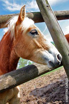 Horse - Follow me on http://urlin.it/2e070