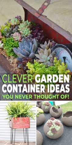 Here are some great ideas for creative gardening, using some really clever garden container ideas you never thought of! #gardenideas #gardening #diygardenideas #diygardenprojects #gardencontainers #gardencontainerideas #diygardencontainers #diygardencontainerideas #planters #gardenplanters #TGG