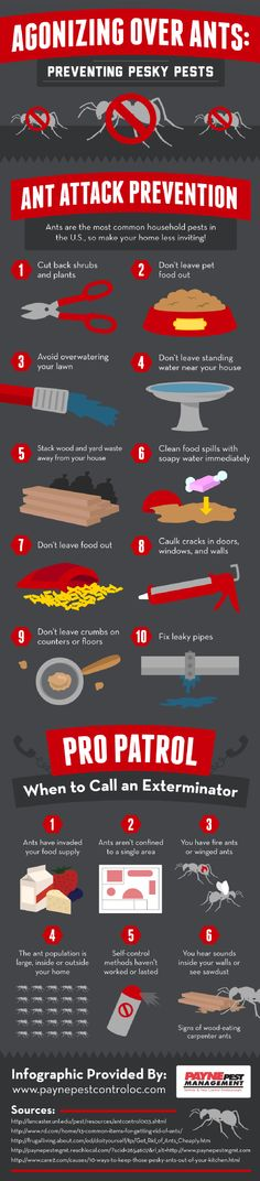 agonizing-over-ants-preventing-pesky-pests-infographic