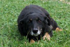 Timido Eraclito e' molto buono e cerca una famiglia per sempre! info: adozioni@leudica.org / Eraclito is a shy dog that's very docile and is looking for a good home.  ADOPTED!!!