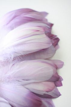 Hand-dyed purple feathers by Myra Callan