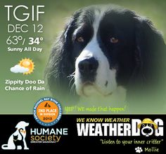 WEATHERDOG : Weather report promoting the Human Society. Mollie's mother. Its All Good, Weather Report, Savannah Chat, Creative Design, Shit Happens, Digital, Fun, Weather Forecast, Hilarious