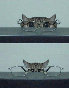 ネコと眼鏡