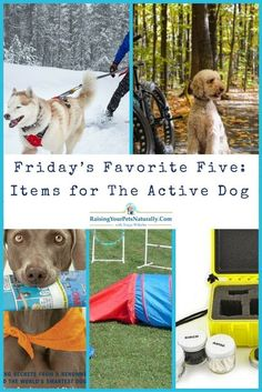 Friday's Favorite Five: Items for The Active Dog. Do you have an active dog or active dogs on your hands? There are many active dog breeds, including small active dogs. Keeping these dogs both mentally and physically busy and engaged is key to living with them and enjoying their company. @kyrasundance @biketowleash @ruffwear #sponsored: