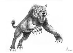 Sabretooth Tiger Drawing by: Murphy Elliott Plant City, Florida Alien Creatures, Prehistoric Creatures, Mythical Creatures, Sabretooth Tiger, Sabretooth Marvel, Tiger Sketch, Tiger Drawing, Fantasy Wolf, Beast