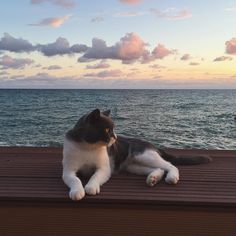 Image shared by kaidy. Find images and videos about cute, cat and animal on We Heart It - the app to get lost in what you love. I Love Cats, Crazy Cats, Cool Cats, Animals And Pets, Baby Animals, Cute Animals, Amor Animal, Cat Aesthetic, Doja Cat