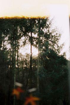 woods/sunlight impression