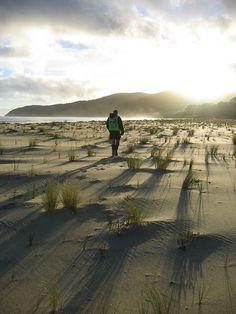 At The Bottom Of New Zealand, Rakiura Track, Stewart Island. Next stop south -  Antarctica