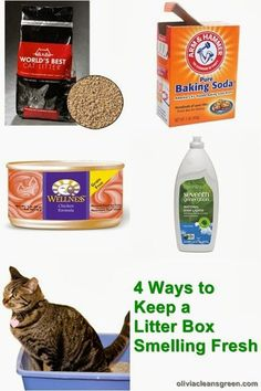 If you are worried about your home smelling because of the litterbox, consider these simple options to keep things smelling fresh. Having kitties doesn't have to mean having a smelly space to live!