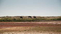 Wild horses by Fabi Nuka on 500px Danube Delta, Wild Horses, Nature, Naturaleza, Nature Illustration, Off Grid, Wild Mustangs, Natural