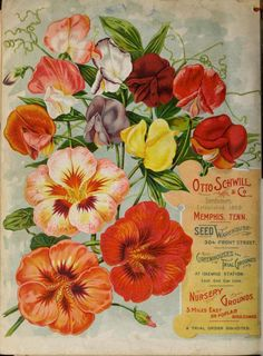 Illustrated back cover of Otto Schwill & Co's 1899 'Price List and Catalogue of Seeds, Trees and Plants of Every Description.' Otto Schwill & Co, Memphis, Tenn. Department of Agriculture,. Garden Catalogs, Plant Catalogs, Seed Catalogs, Garden Art, Garden Tools, Vintage Seed Packets, Garden Images, Flower Seeds, Botanical Prints