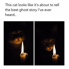 45 Trendy funny animals memes make me laugh mom Funny Animal Memes, Funny Animals, Funny Memes, Animal Humor, Videos Funny, Best Ghost Stories, Spooky Stories, Tips Fitness, Lol
