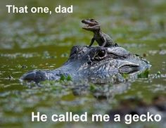 Oh, the places you'll go! http://media-cache6.pinterest.com/upload/238127899017295734_nTraQK8A_f.jpg sky_on_fire cuteness hilarity