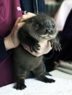 Archibald Otter on