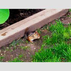 wildlife in backyard
