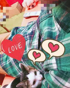 父ちゃん大好きっ子、うーちゃん🐱💕 ピトっとくっついて、幸せそう🎵  ぴー🐶が少し離れたところで、羨ましそうにじっとり見てる😅  #猫 #にゃんこ #にゃんすたぐらむ #ねこすたぐらむ #愛猫 #犬と猫のいる暮らし #犬 #ワンコ #ペキニーズ #ペキニーズ大好き #ぺきすたぐらむ #ぺきにーず #cat #catstagram #catanddog #ilovecats #lifewithcatanddog #dogstagram #pekingese #petstagram #ilovedog
