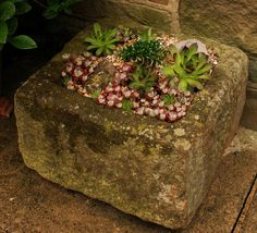 Stone Troughs are ideal for Succulents