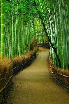 Kyoto, Japan | Interesting Shots I love bamboo.