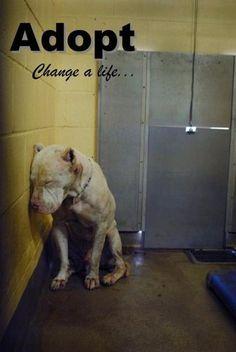 adopt!! misc
