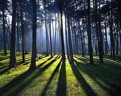 lumière en forêt