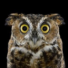 Portraits-of-Owls-Brad-Wilson-1