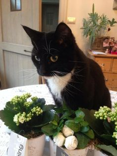 My lovely Mimi. I found her when she was tiny and starving. Now she is this beautiful! Sent in by Martine Verheyen.