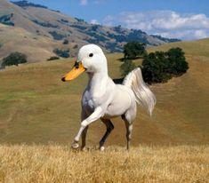 Nieuwe Photoshoprage: bizarre kruisingen tussen dieren