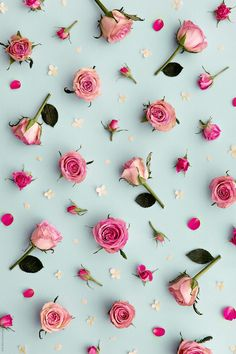 Papel de parede fofo · rose background by ruth black - flower, rose - stocksy united Floral Wallpaper Phone, Flower Background Wallpaper, Rose Background, Cute Wallpaper Backgrounds, Wallpaper Iphone Cute, Pretty Wallpapers, Cellphone Wallpaper, Colorful Wallpaper, Flower Wallpaper