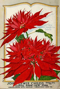 Child's 1923 catalogue, with the 'New Christmas Poinsettia'