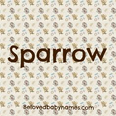Beloved Baby Names: Name Crush Monday: Sparrow Cute Baby Names, Kid Names, Nature Names, Unisex Name, Unusual Names, Baby Name List, Names With Meaning, Joel Madden, Meant To Be