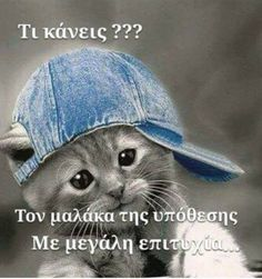 Visit the post for more. Funny Animal Memes, Funny Animals, Cute Baby Animals, Animals And Pets, Funny Greek Quotes, Big Words, Funny Vid, Clever Quotes, True Words