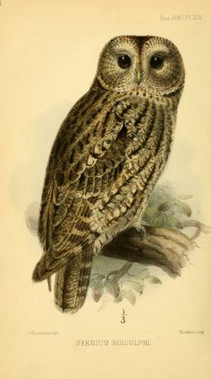 ser. 4, v. 5 (1881) - Ibis. - Biodiversity Heritage Library