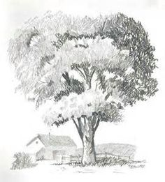 Tree Drawings in Pencil.