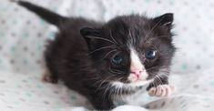 Badger, the Hot Mess Kitten! - We Love Cats and Kittens Newborn Kittens, Baby Kittens, Kittens Cutest, Cats And Kittens, Best Cat Gifs, Kitten Care, Silly Cats, Kitten Gif, Kittens Playing