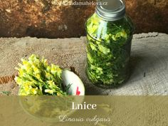 Pesto z bršlice Pesto, Pickles, Cucumber, Mason Jars, Den, Food, Biology, Meal, Eten