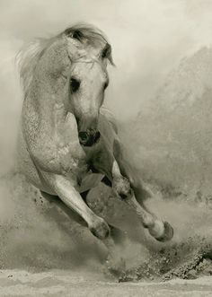 Amazing Photographs of Horses | 20+ pictures | Most Beautiful Pages