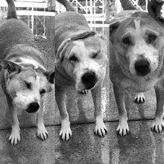 I'm just gonna shake, shake, shake, shake, shake. I #shakeitoff … #katedog Shake Shake, Shake It Off, High Speed Photography, Puppies, Dogs, Animals, Hi Speed Photography, Cubs, Animales