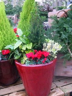 The Garden Blog: December 2010 We love the bright red #planter filled with evergreens, & flowers. Make your deck Christmas friendly!