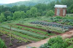 lovely garden at Thomas Jefferson's home in Charlottesville Va.!!! Been there and love it!