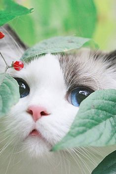 These pretty cats will warm your heart. Cats are wonderful friends. Cute Cats And Kittens, I Love Cats, Kittens Cutest, Pretty Cats, Beautiful Cats, Animals Beautiful, Beautiful Pictures, Cute Baby Animals, Funny Animals